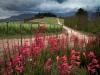 lomarins-wine-estate-watsinia-flowers-and-vineyards-franschhoek-south-africa-2011_0