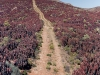 the-path-up-the-hill-red-succulants-richtersveld-national-park-south-africa-2010_0