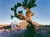 y10620 - Africa, South African Republic, Eastern Cape, Great Karoo, near Willowmore. - Africa, Suedafrika, Ostkap, Great Karoo, bei Willowmore.  2007.  - 60_MB.  Copyright: Obie Oberholzer / Bilderberg