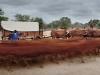 y10672 - Africa, South Africa, province of Limpopo, Mookestsi area, Rolvark farm. Voortrekker ox-wagon. - Afrika, Suedafrika, Provinz Limpopo, Gebiet Mookestsi, Rolvarkfarm. Voortrekker. Ochsen, Fuhrwerk. 2007.  - 28.46 MByte.  Copyright: Obie Oberholzer / Bilderberg [Published in Long Ago Way: in the Footsteps of Alphons Hustinx p. 150]