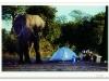 longagoway_elephant-at-tent