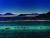Wild horses of the Namib. Near Aus. Nambi NauKluft National Park. Namibia. '97.