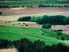 Farmlands near Ficksburg. Eastern Free State. South Africa