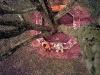 lunch-time-beneath-jacaranda-tree-grahamstown-south-africa