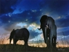 A pair of concrete elephants stand in the evening light at the entrance of the town of Lydenburg in the Mpumalanga Province of South Africa.