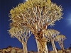 quiver-tree-forest-neat-keetmanshoop-namibia